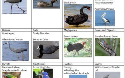 Birds of the Noosa Everglades and Upper Noosa River