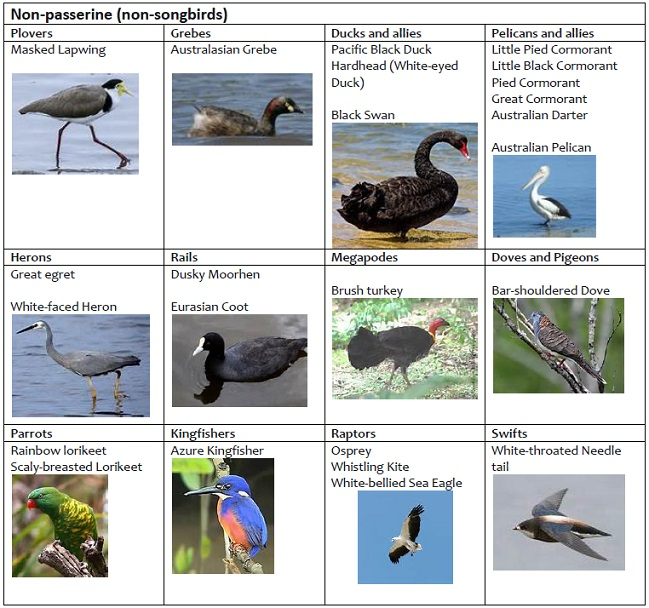 Birds Non Passerine