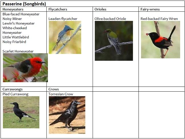 Passerine Birds